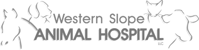 Western Slope Animal Hospital